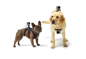 רתמה לכלב או חתול - GoPro Dog Mount